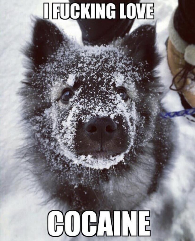 Snow Boi