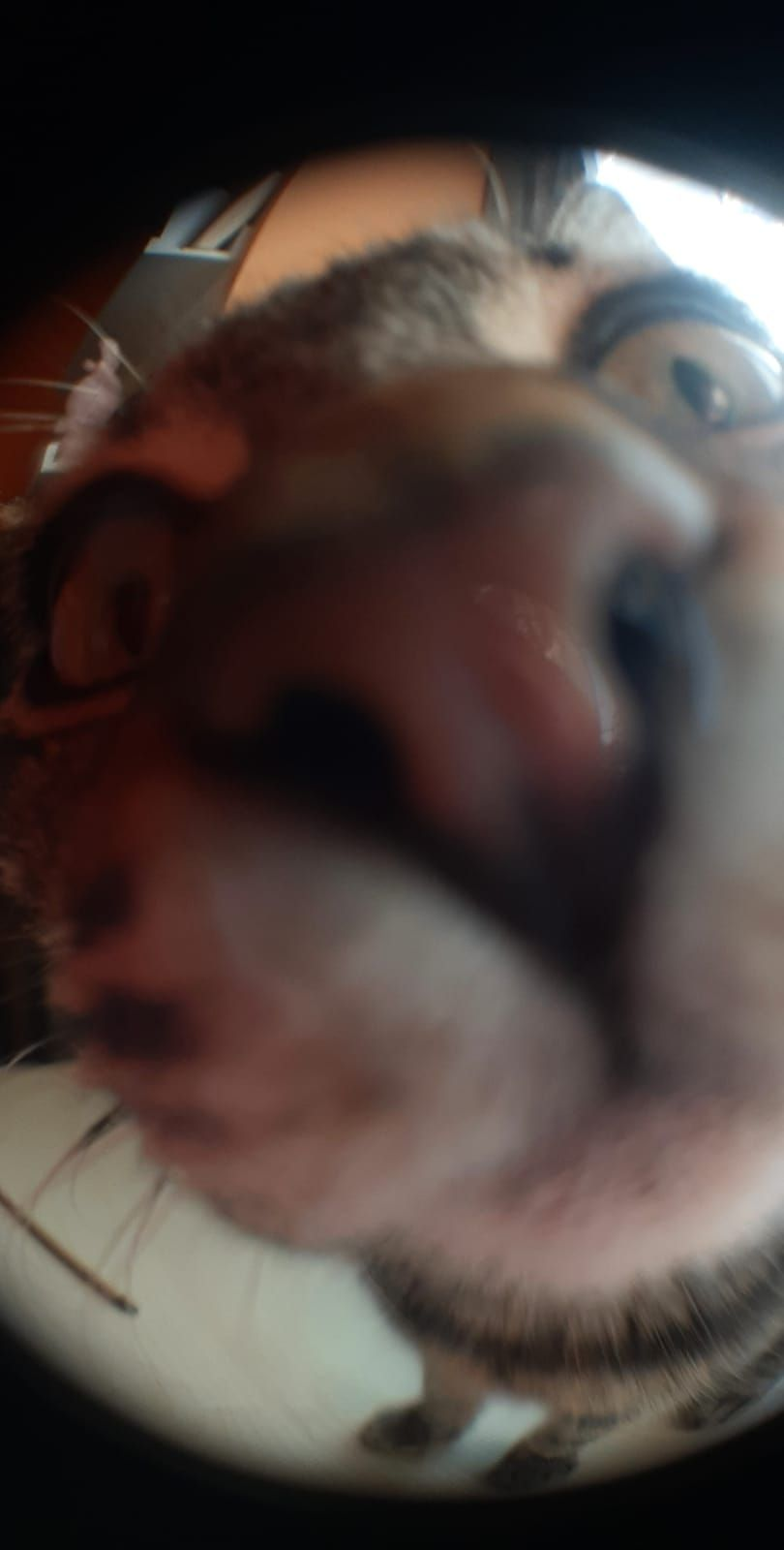 I was trying to take a picture with the fish eye lens, then my cat showed in front of the camera, and I got this priceless photo now....