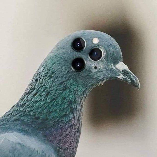 Pigeon 12 pro max