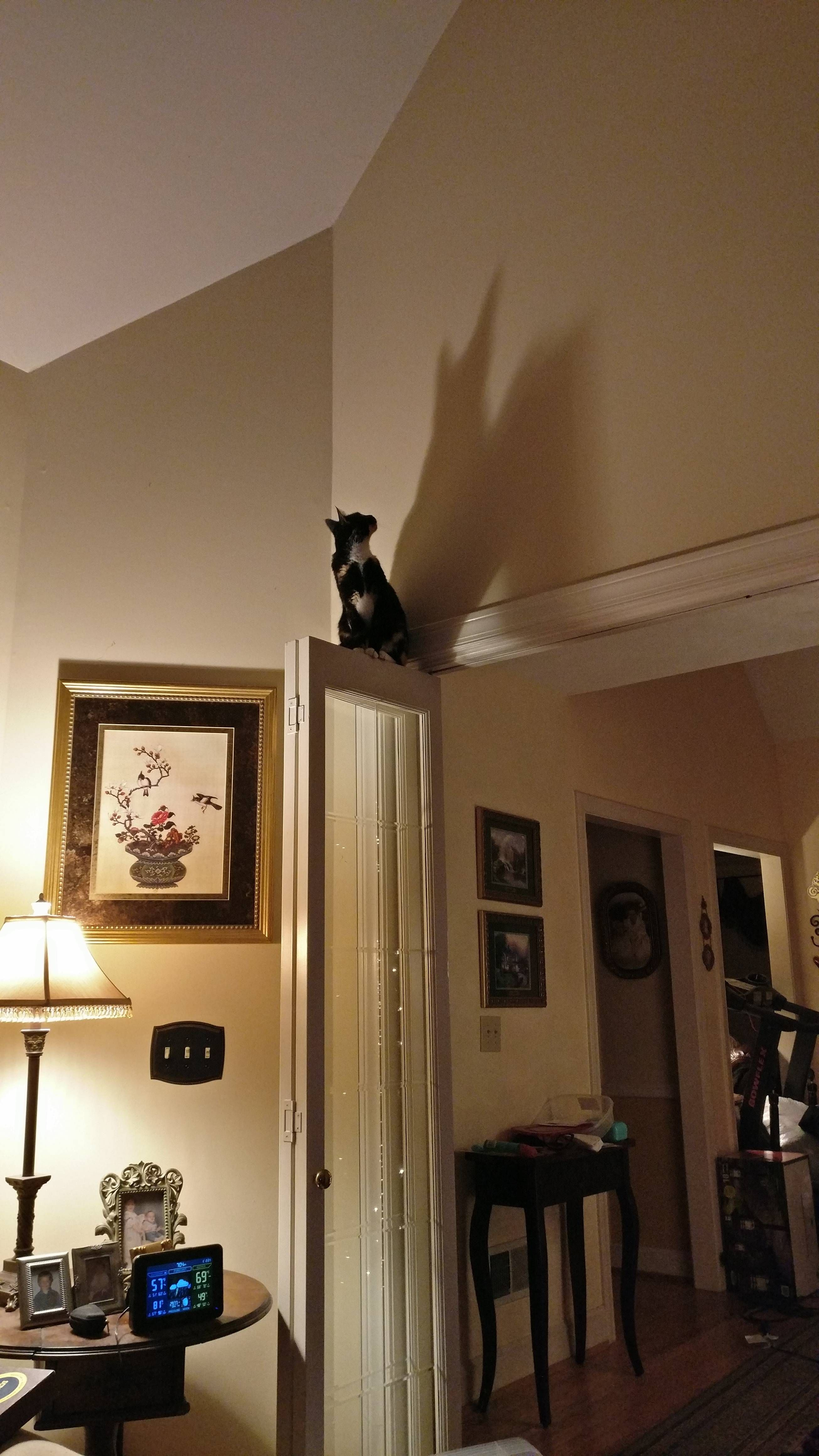 My cat jumps to extreme heights and thinks she's Batman