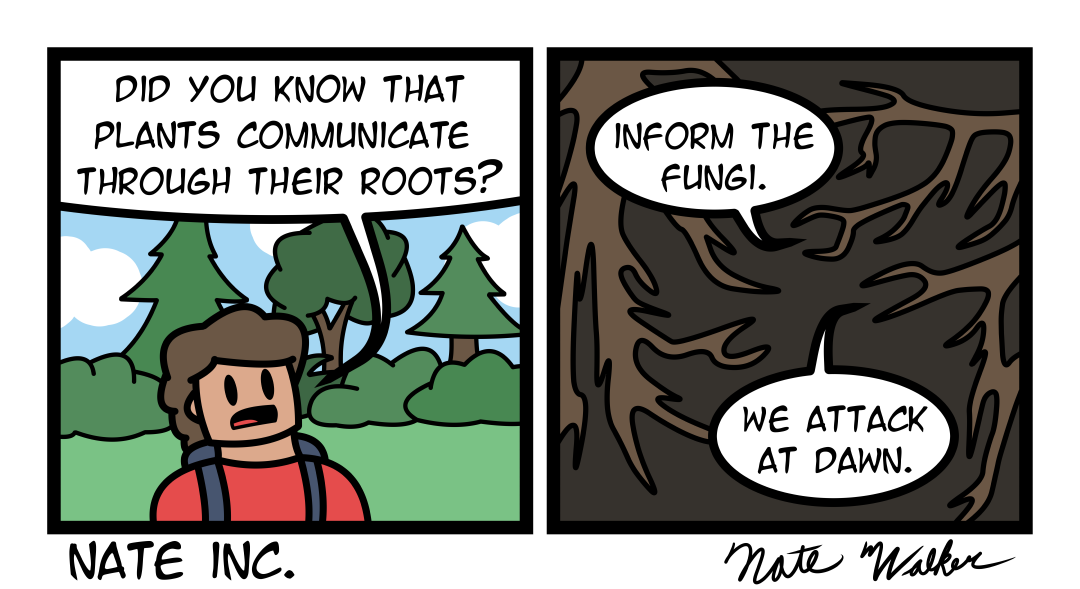 Rooted in violence