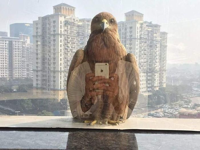 If birds had social media