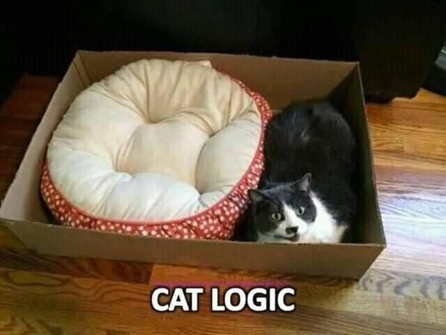 cats,lol