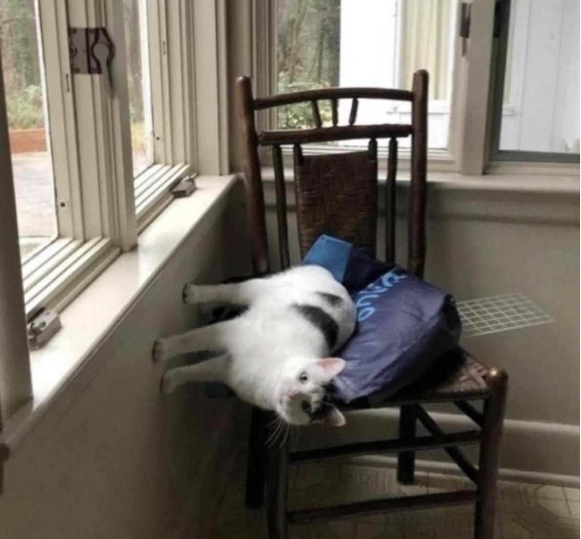 Cats do not observe the laws of physics—-or any laws for that matter