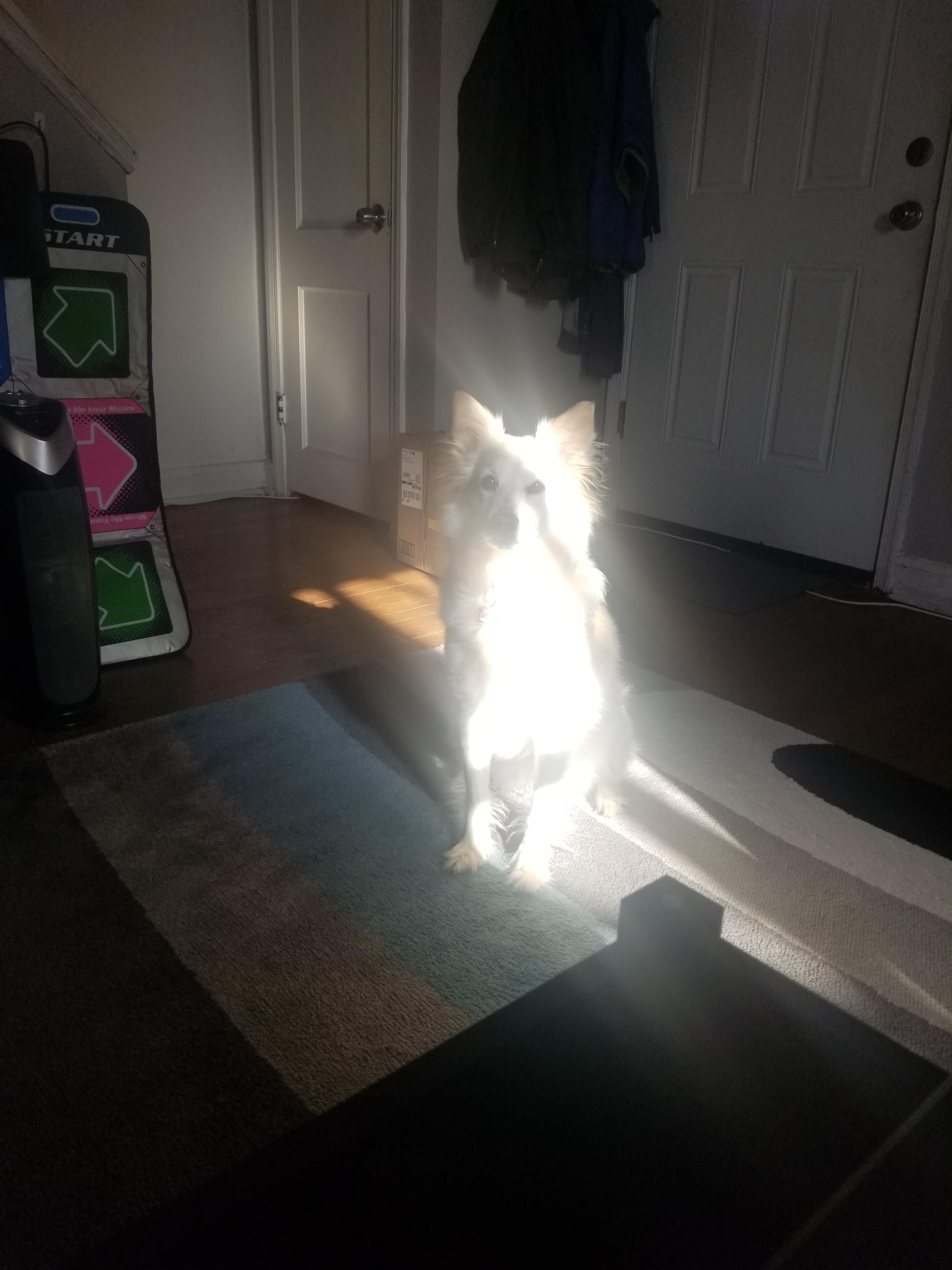 I think my dog has a side quest for me
