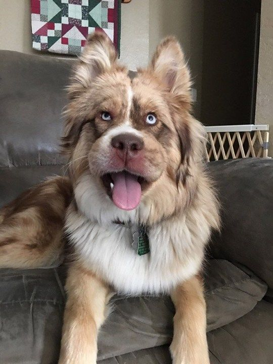 A dog who ate bees and regretted it