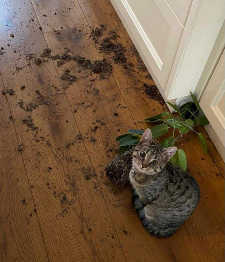 The plant attacked me first!