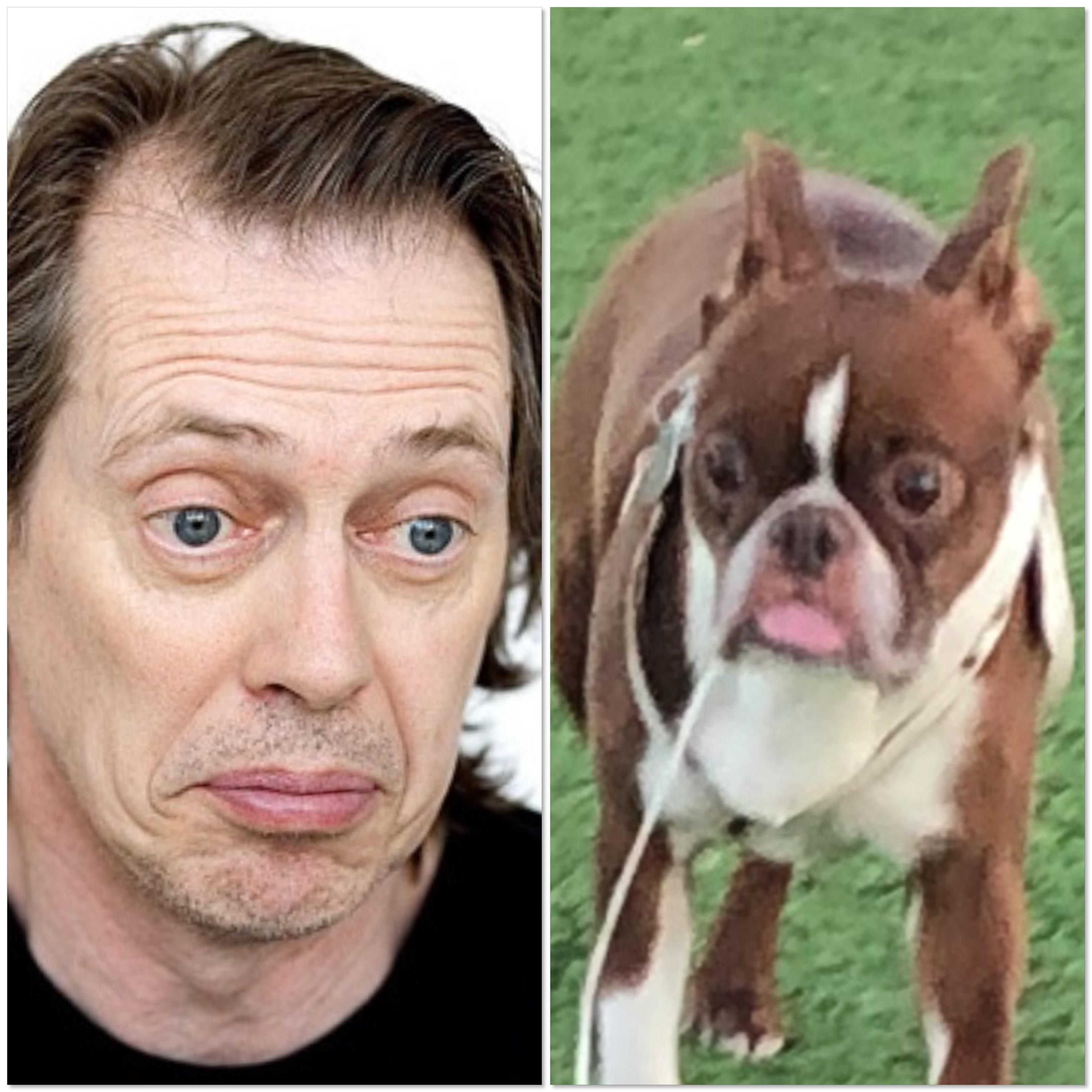 Saw this dog that looks like Steve Buscemi