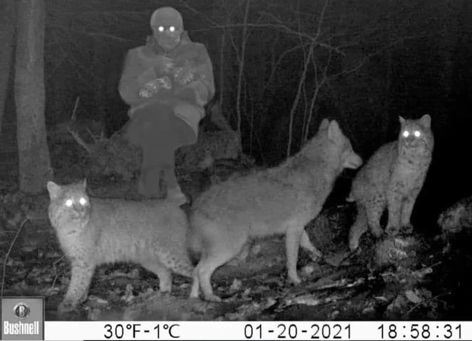 Last night's trail cam.