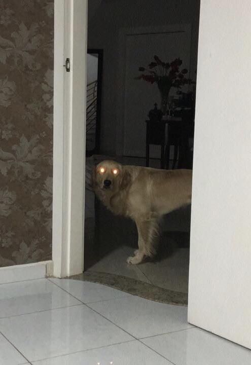 My father said our dog was looking at him with strange eyes, then sent me this photo: