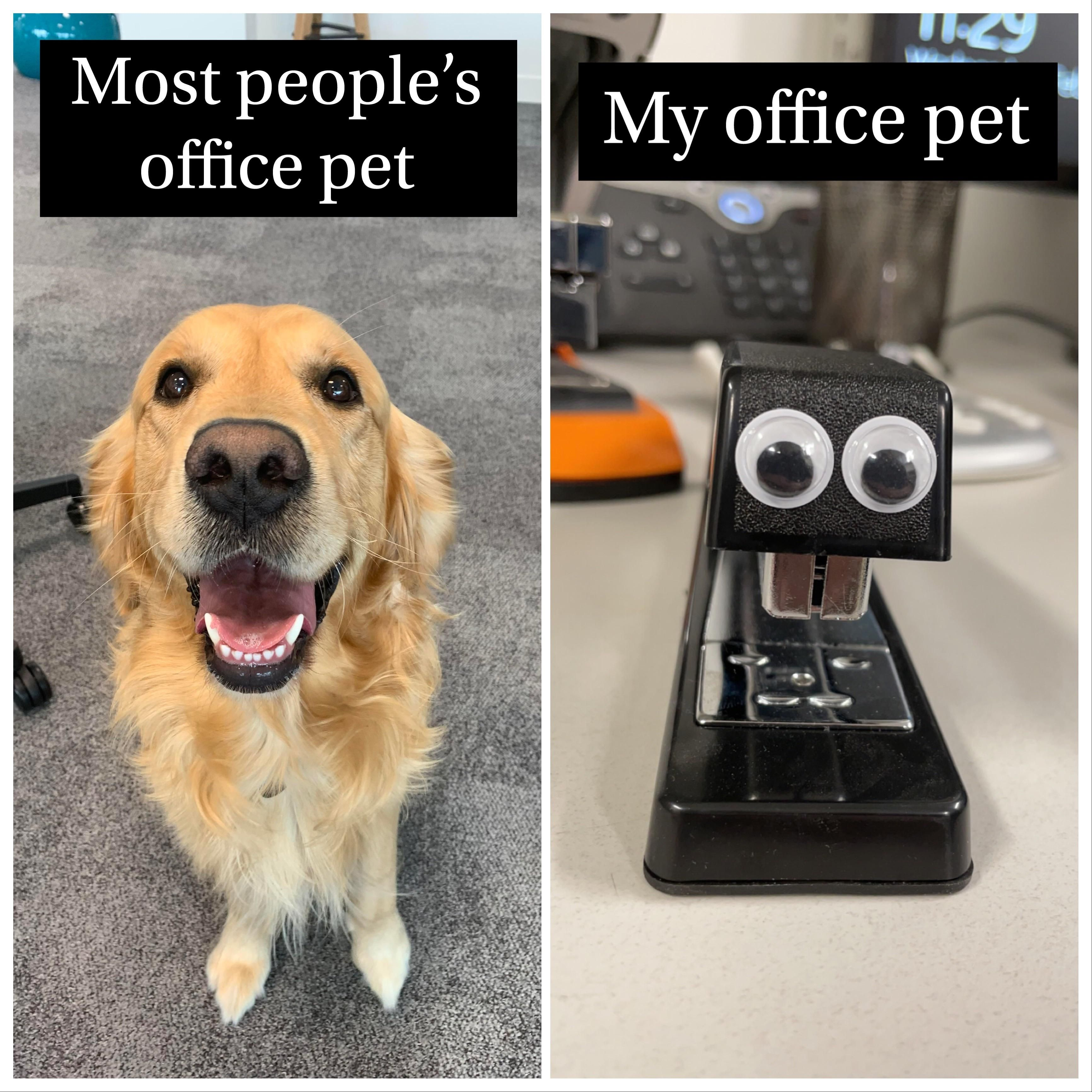 My office doesn't allow pets. I think I found a workaround. His name is Steve.