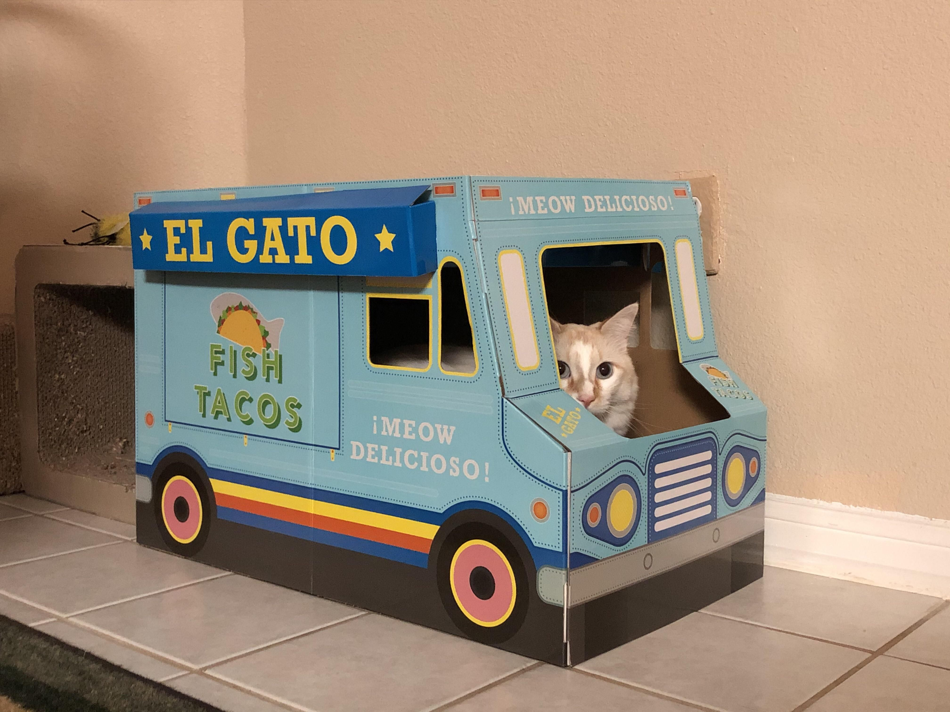 My parents cat has started his own business. 10/10 recommend