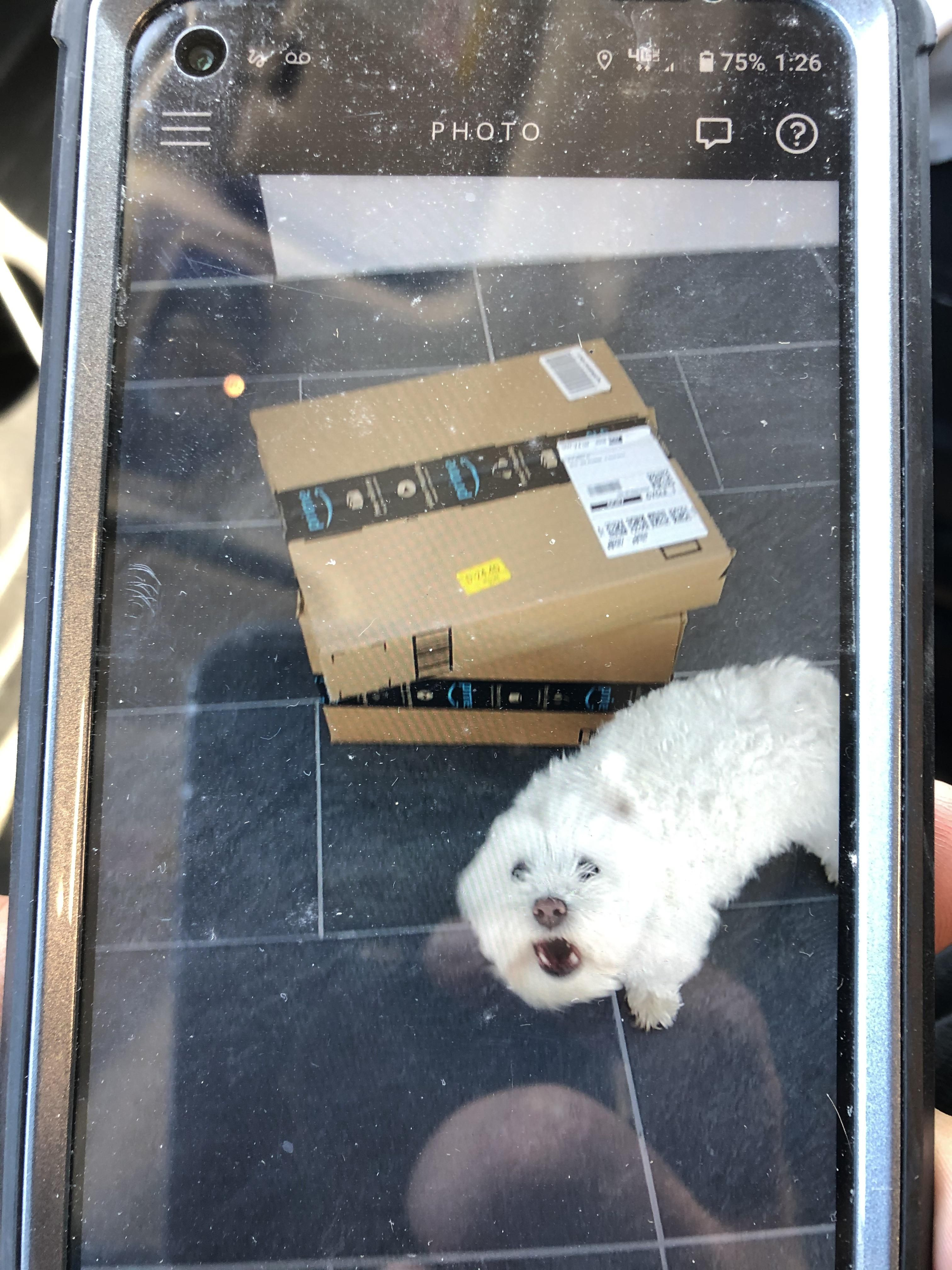 A vicious guard dog attacked me on my Amazon delivery today