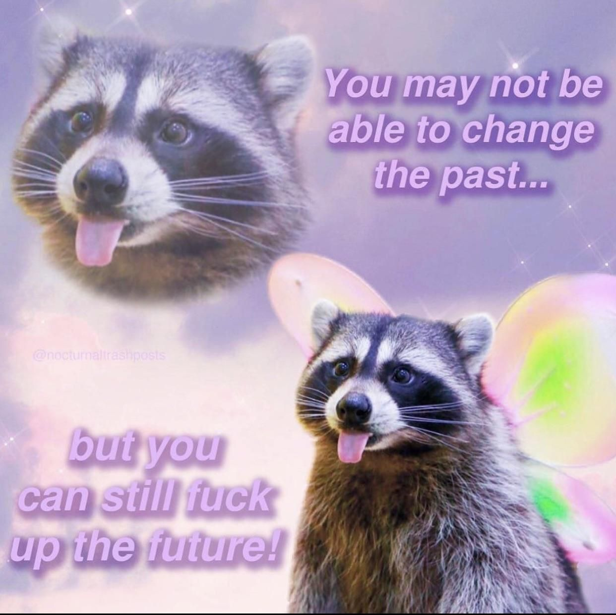 Emotional Support Raccoon