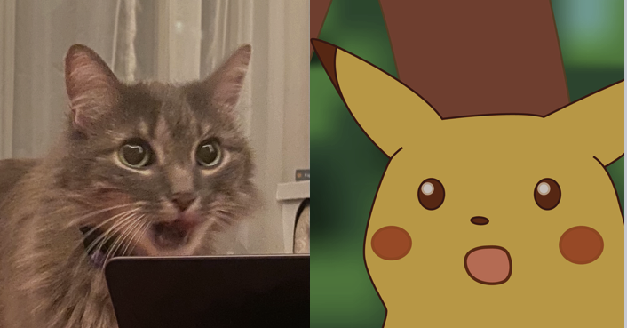caught my cat making the surprised pikachu face