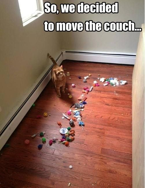 I guess I don't any new cat toys for awhile...