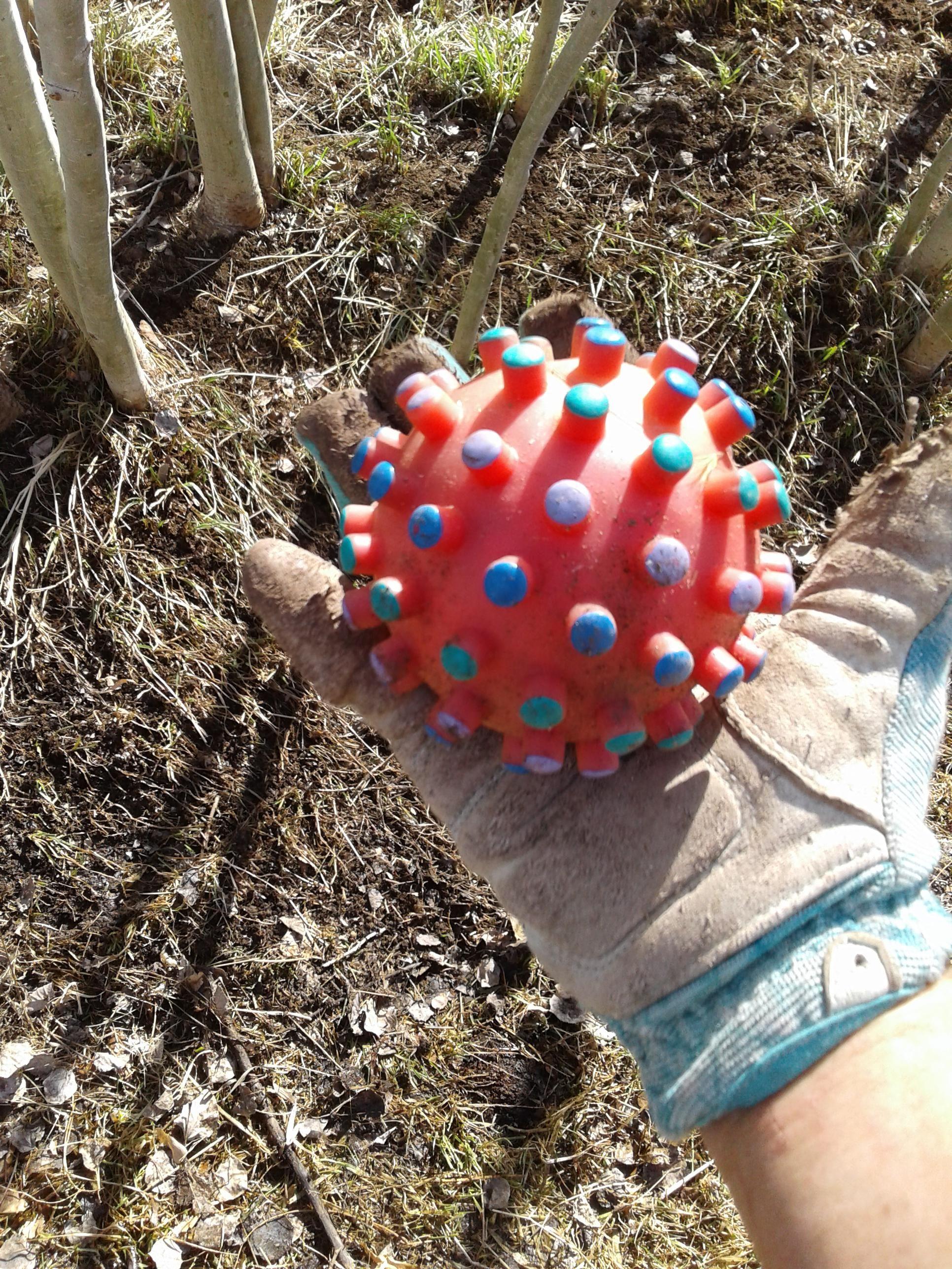 Working in the yard yesterday I think I found the original coronavirus