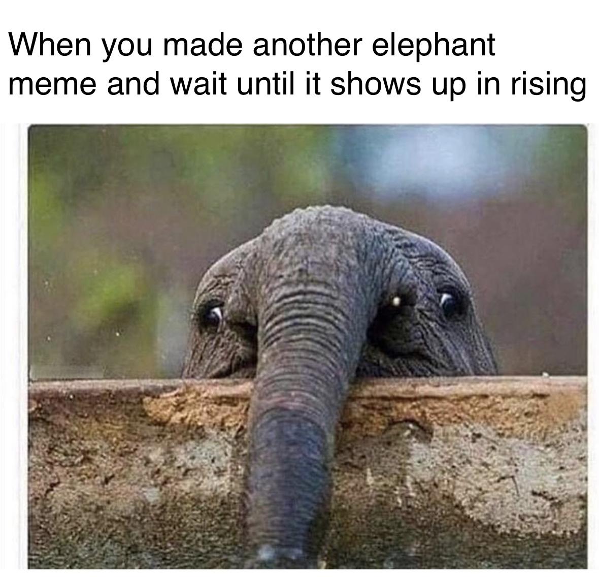 I'm stuck with them elephant tiddies