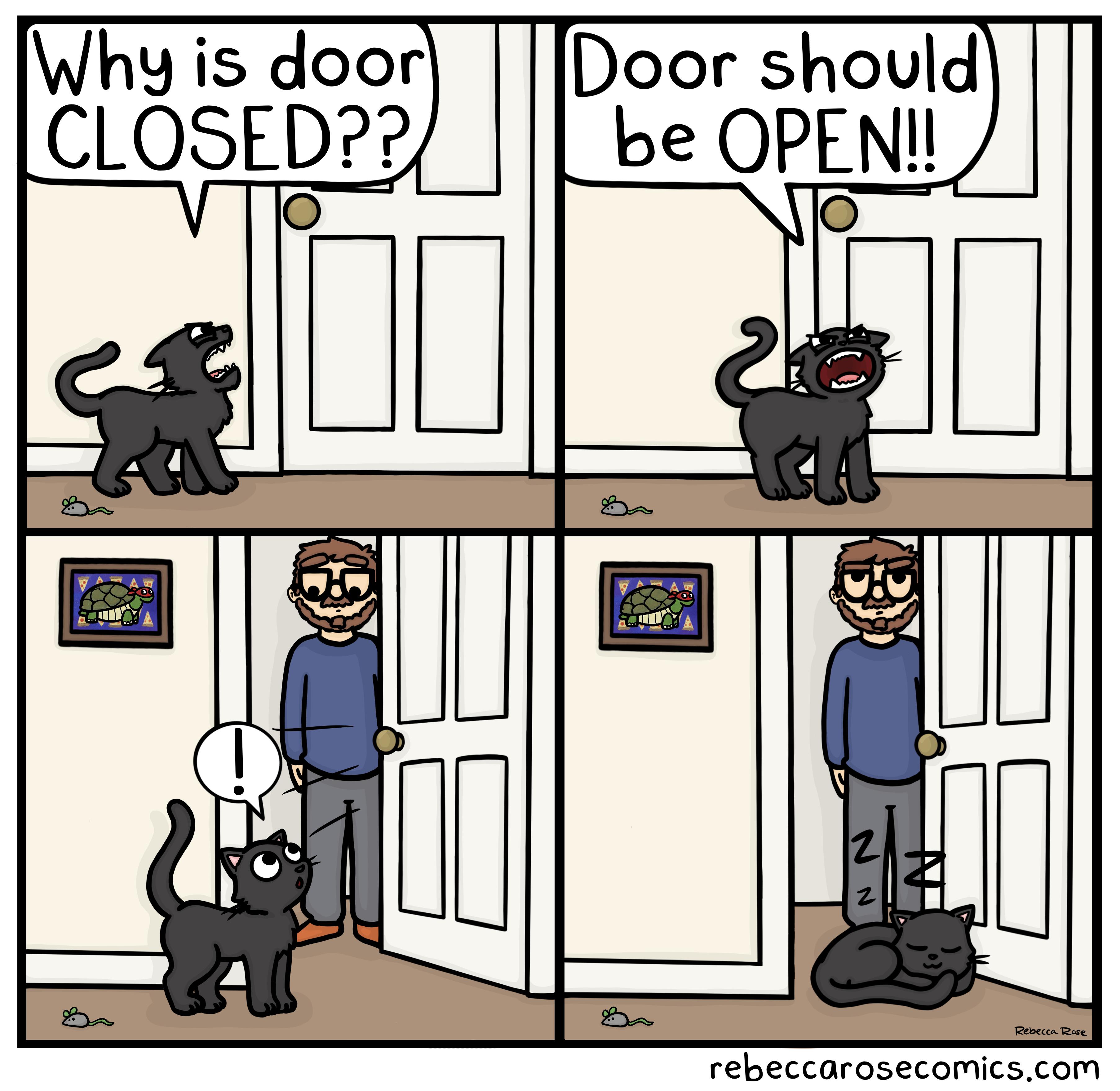 Violation of cat law