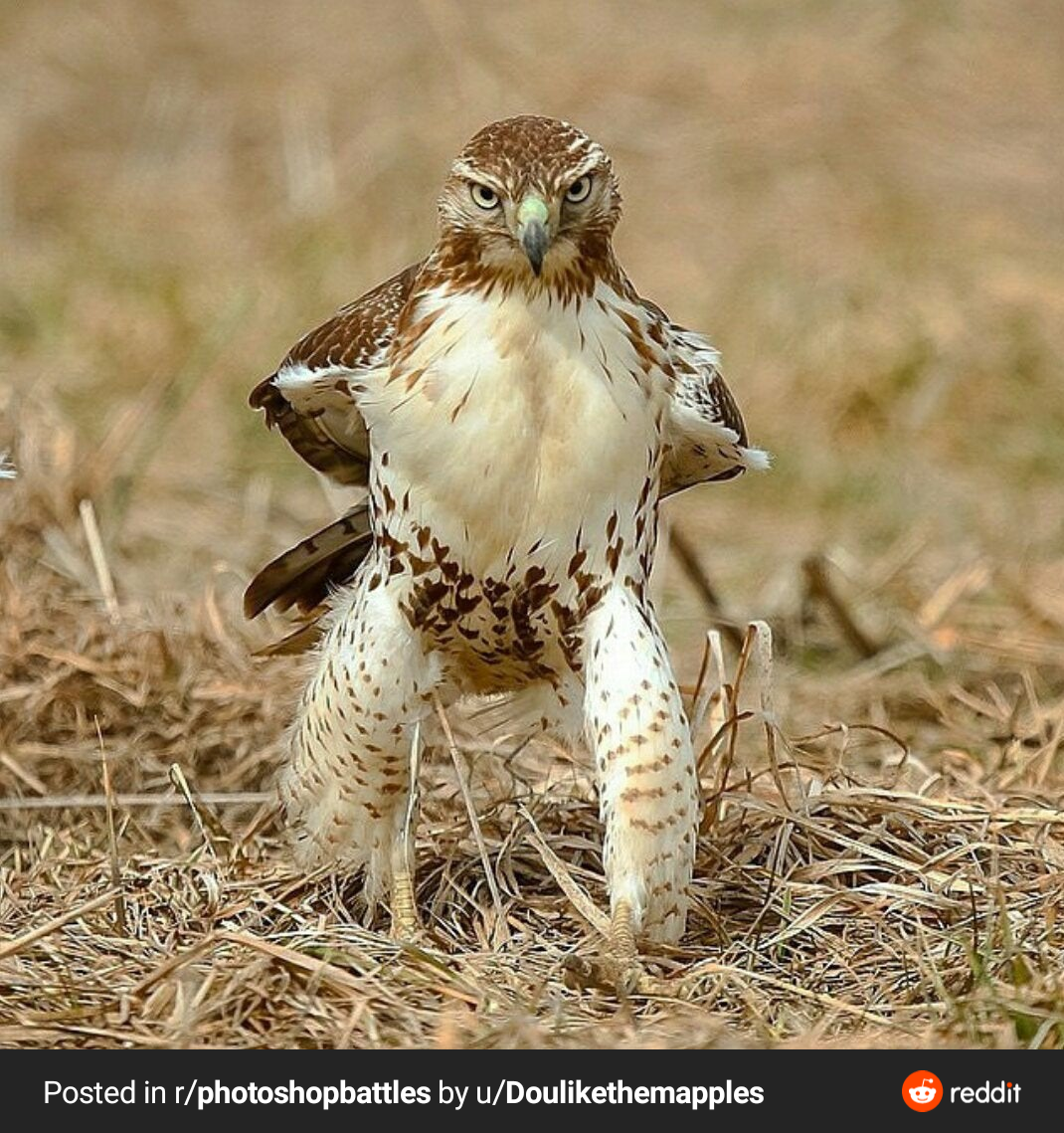 This sassy hawk is not interested in your excuses.