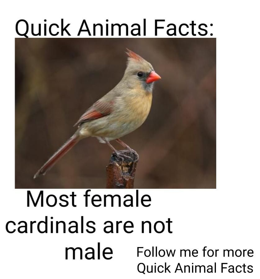 Quick Animal Fact #8