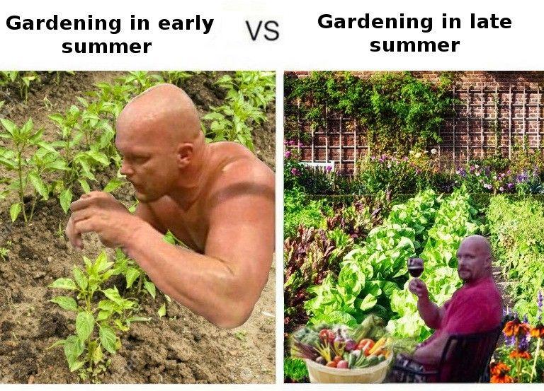 plant radish