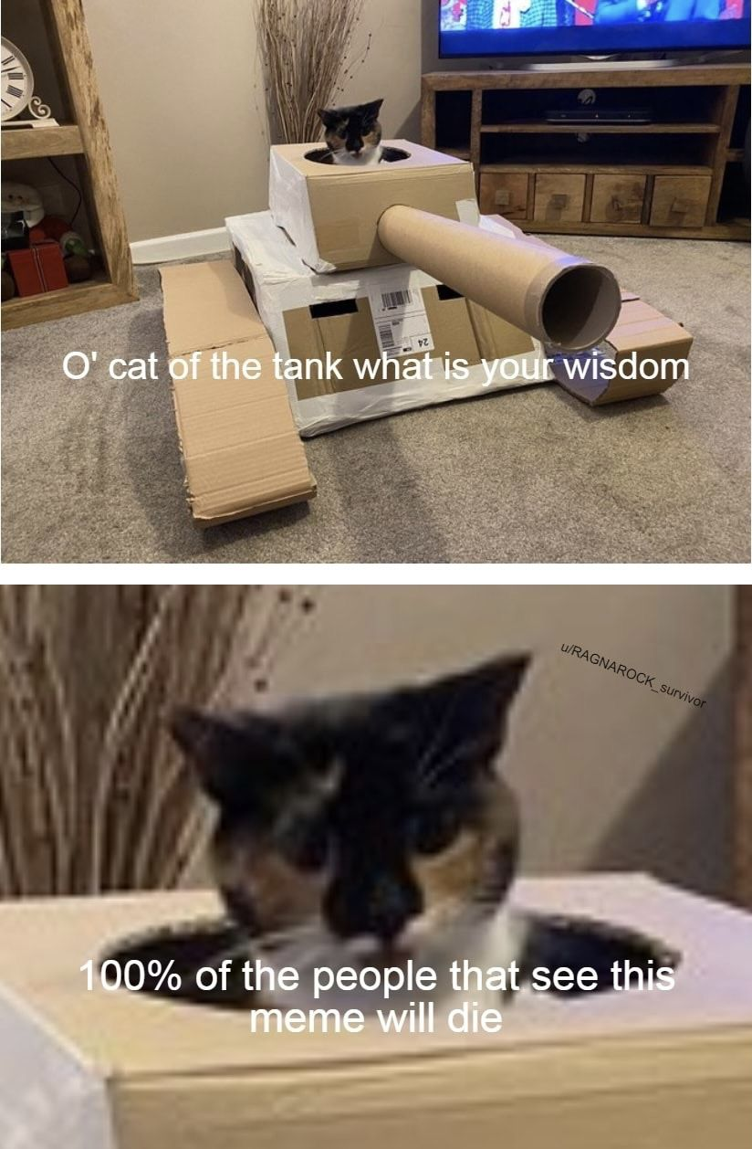Thanks cat of the tank