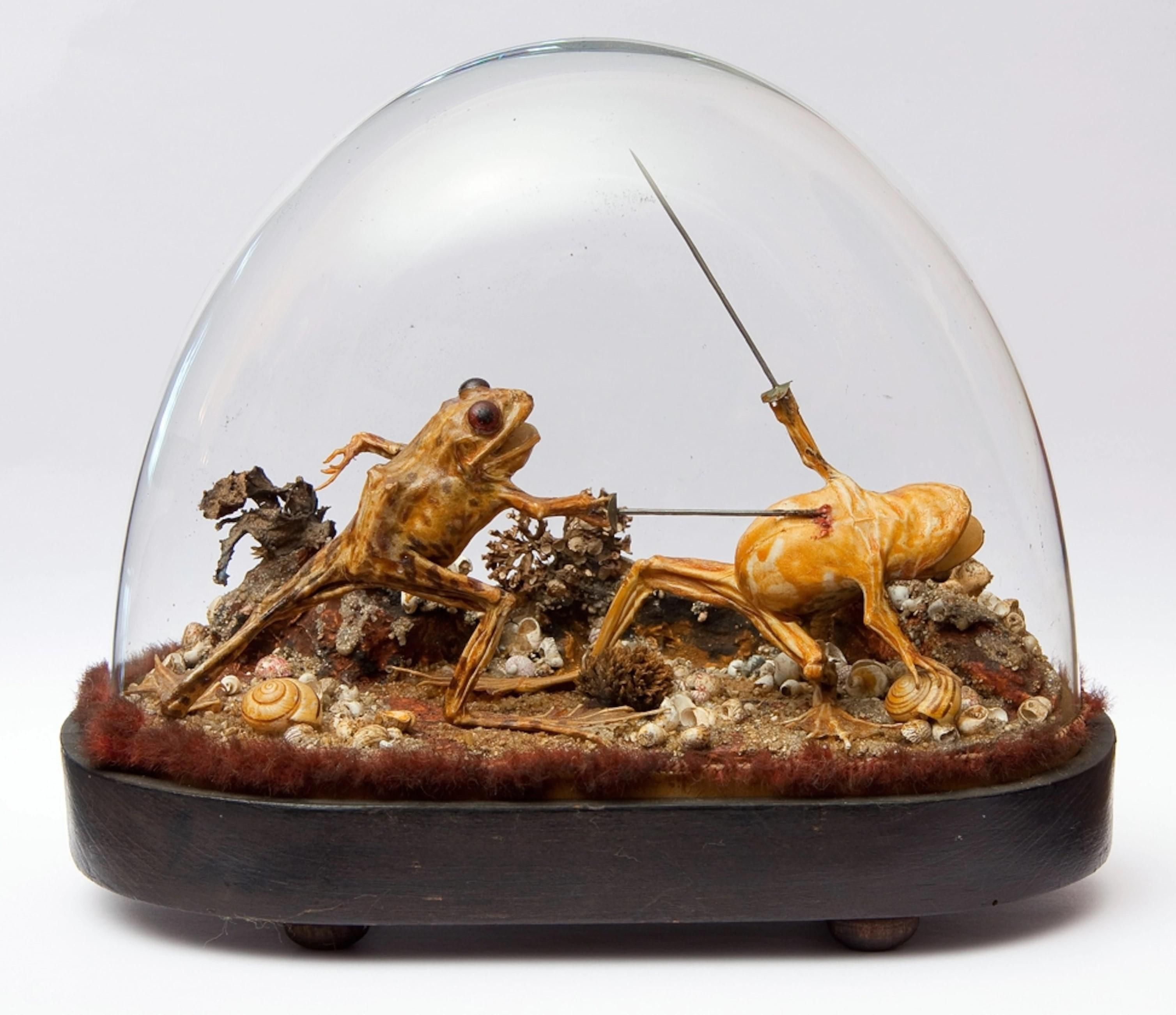 These two taxidermy frogs having a miniature battle. Found in a mansion in Moulins, France that was shuttered for a century.