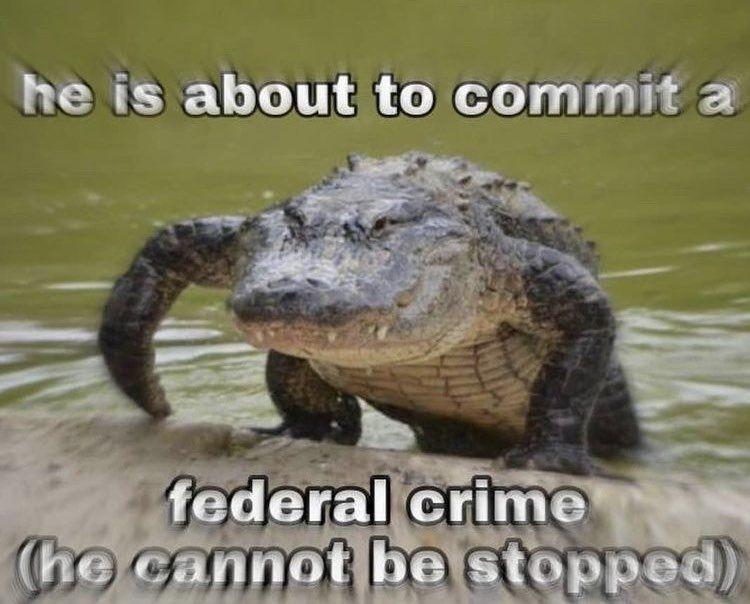 I love crimes.