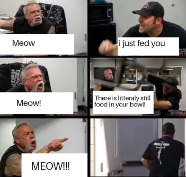 My cat everybody