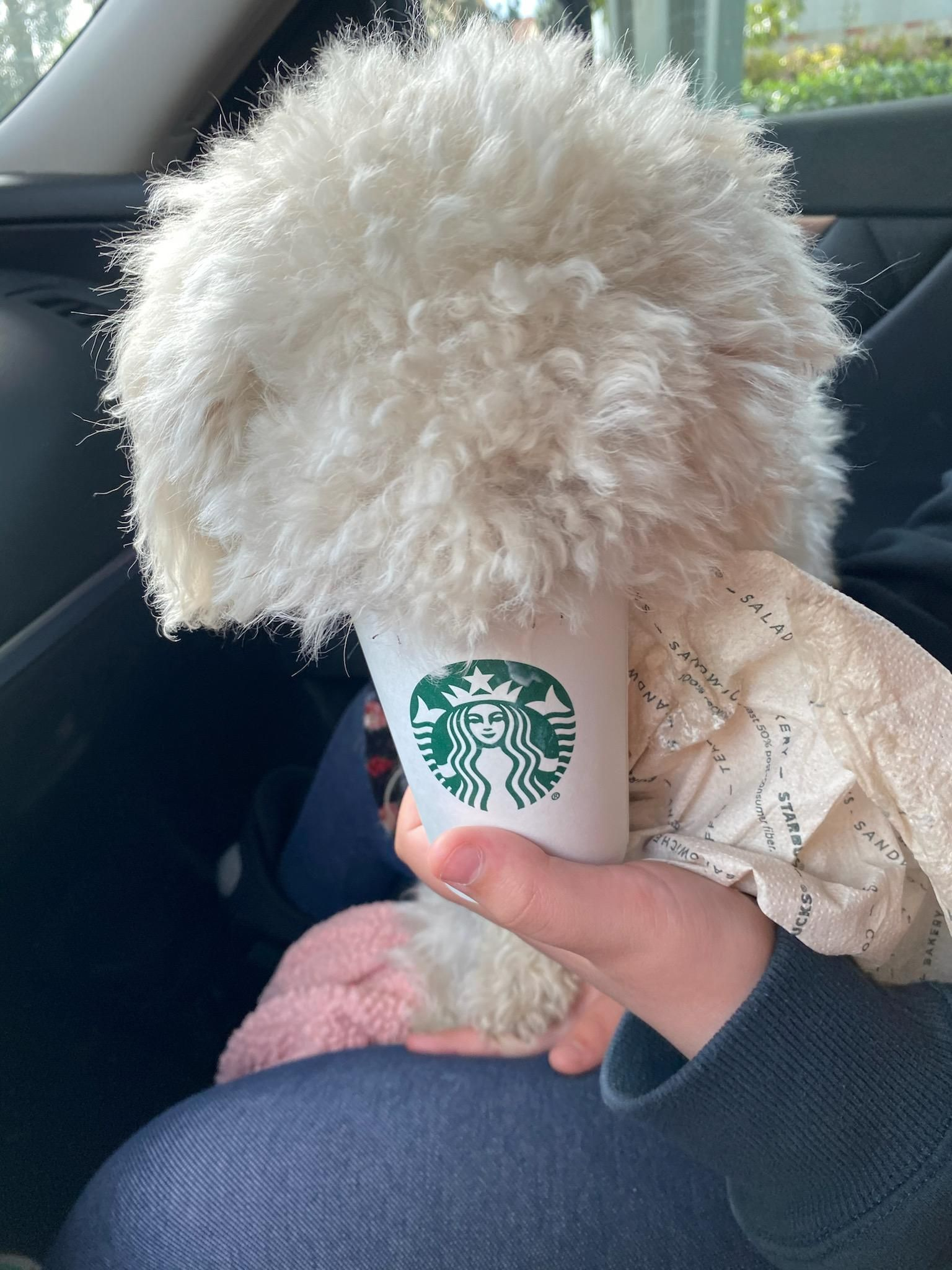 """My puppy eating a """"Puppuccino"""""""