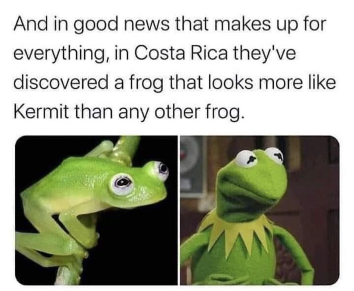 The real Kermit