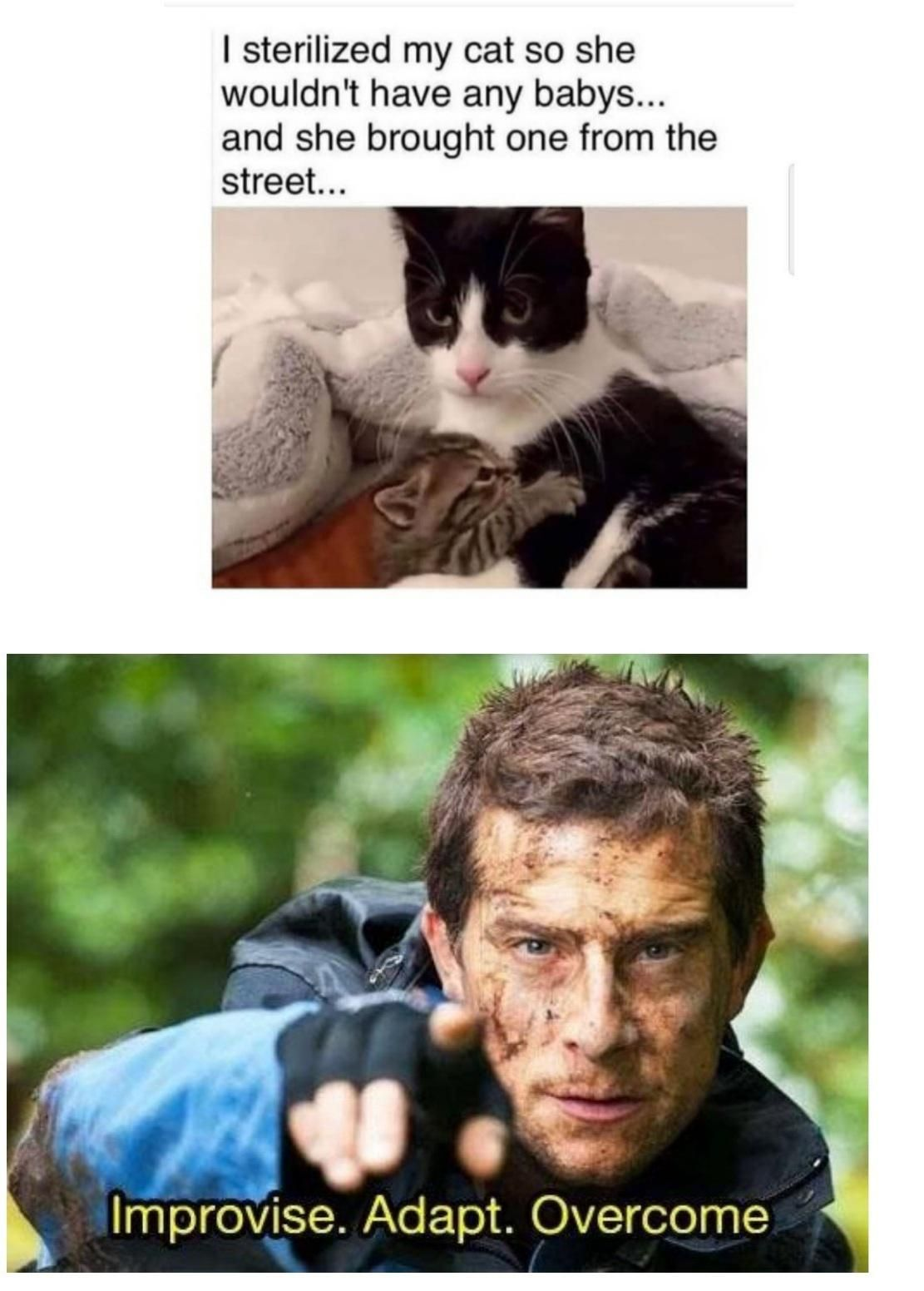 Based cat