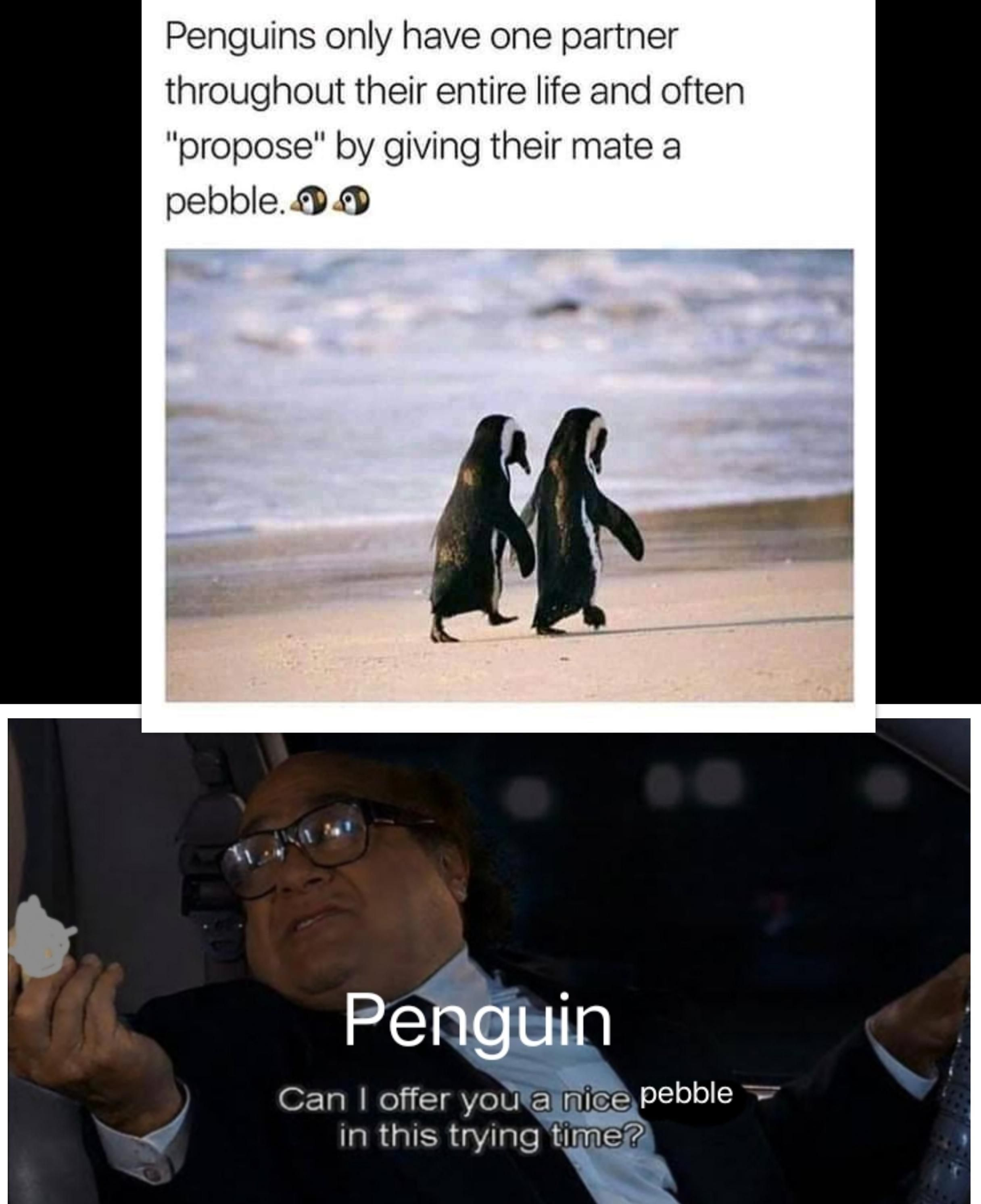 Wholesome penguin