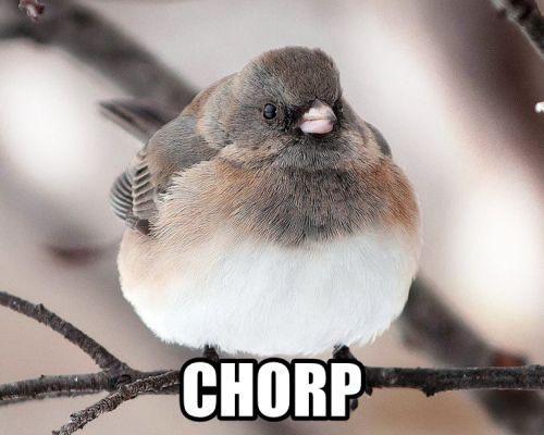 Chunk birds go...
