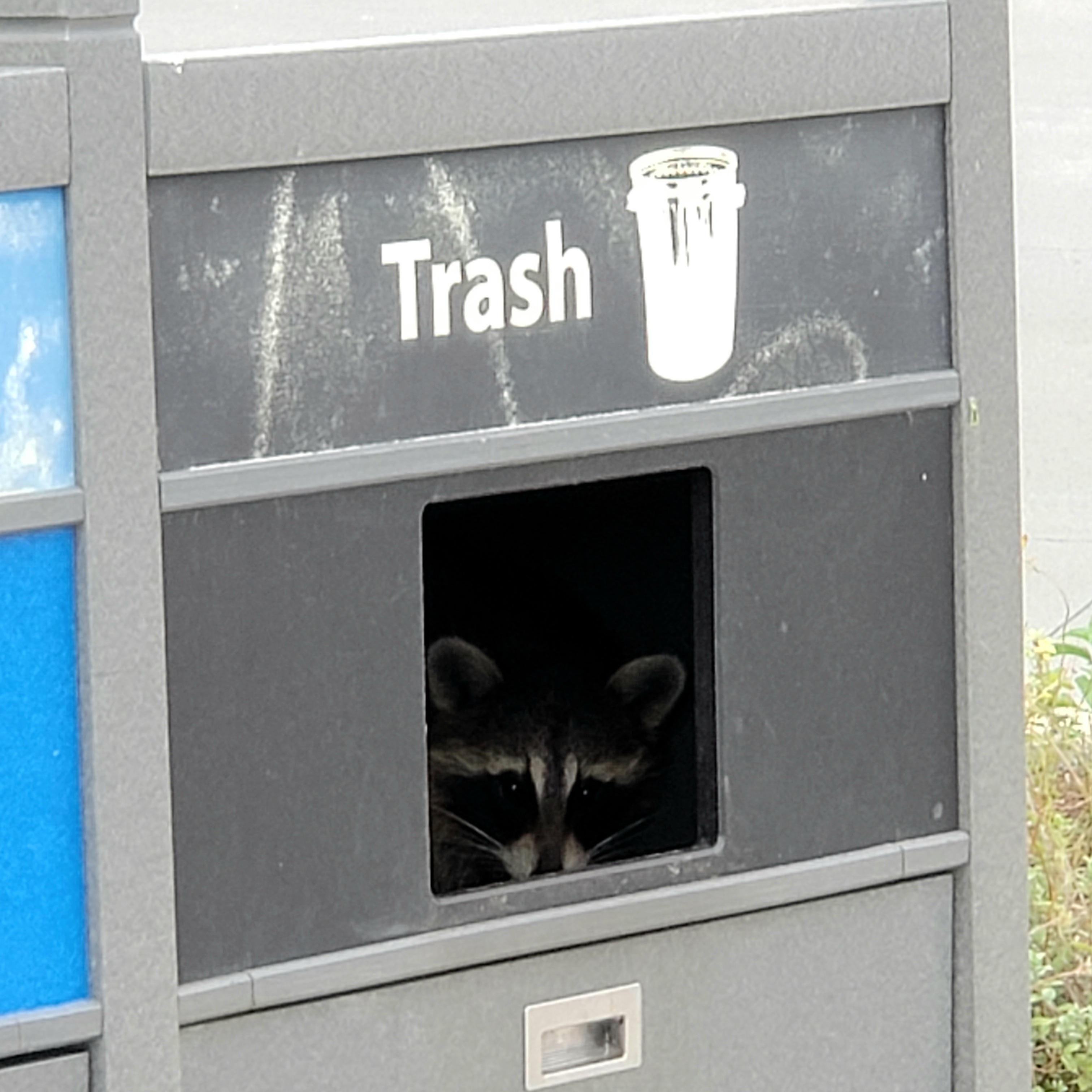 Trash Panda found his home.