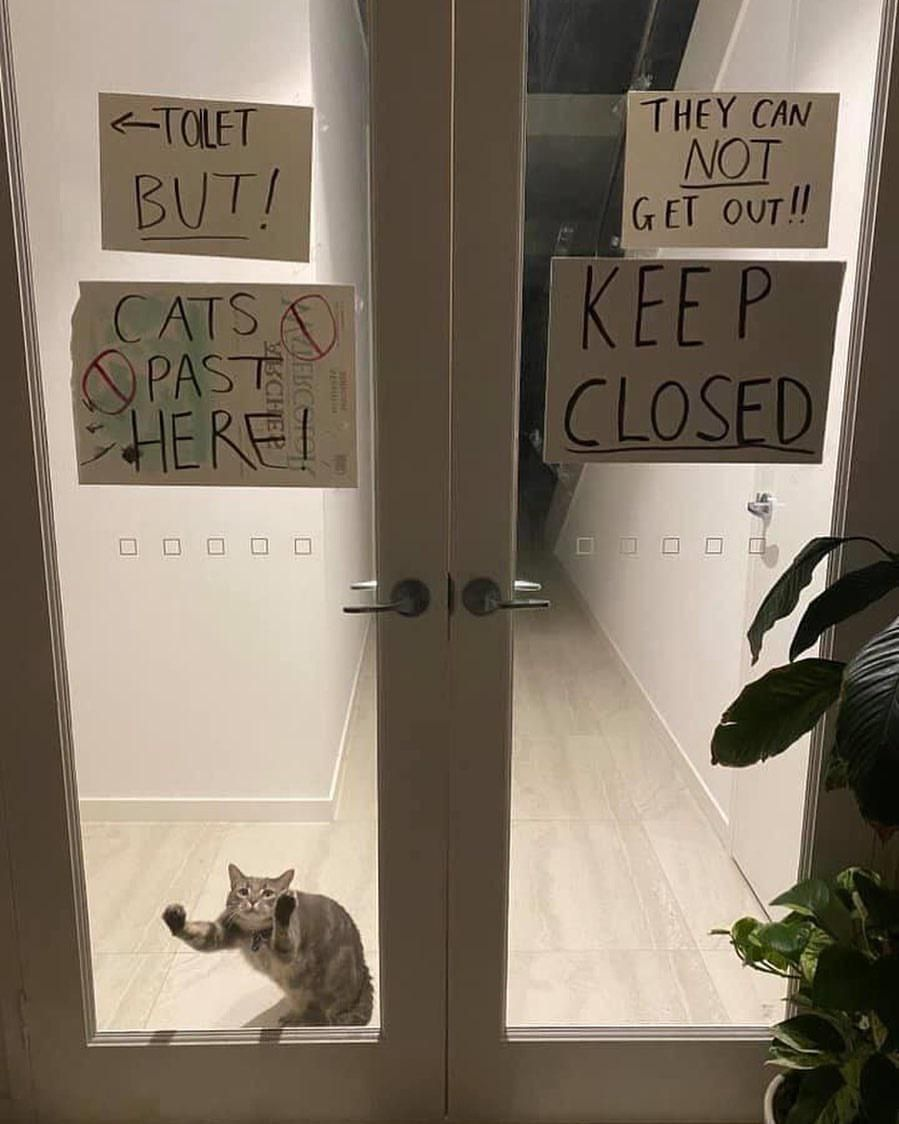 No cats past here
