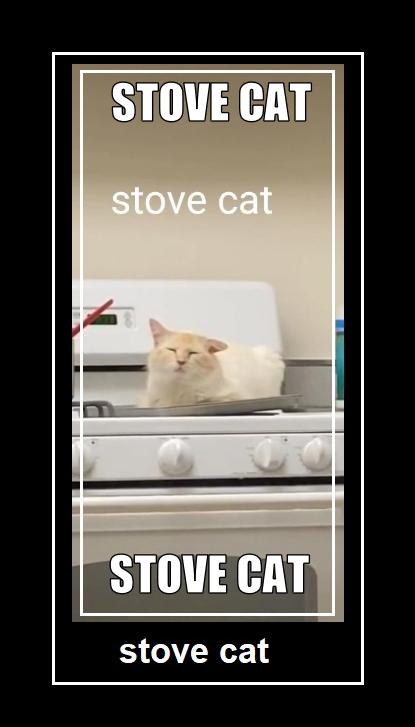 stove cat