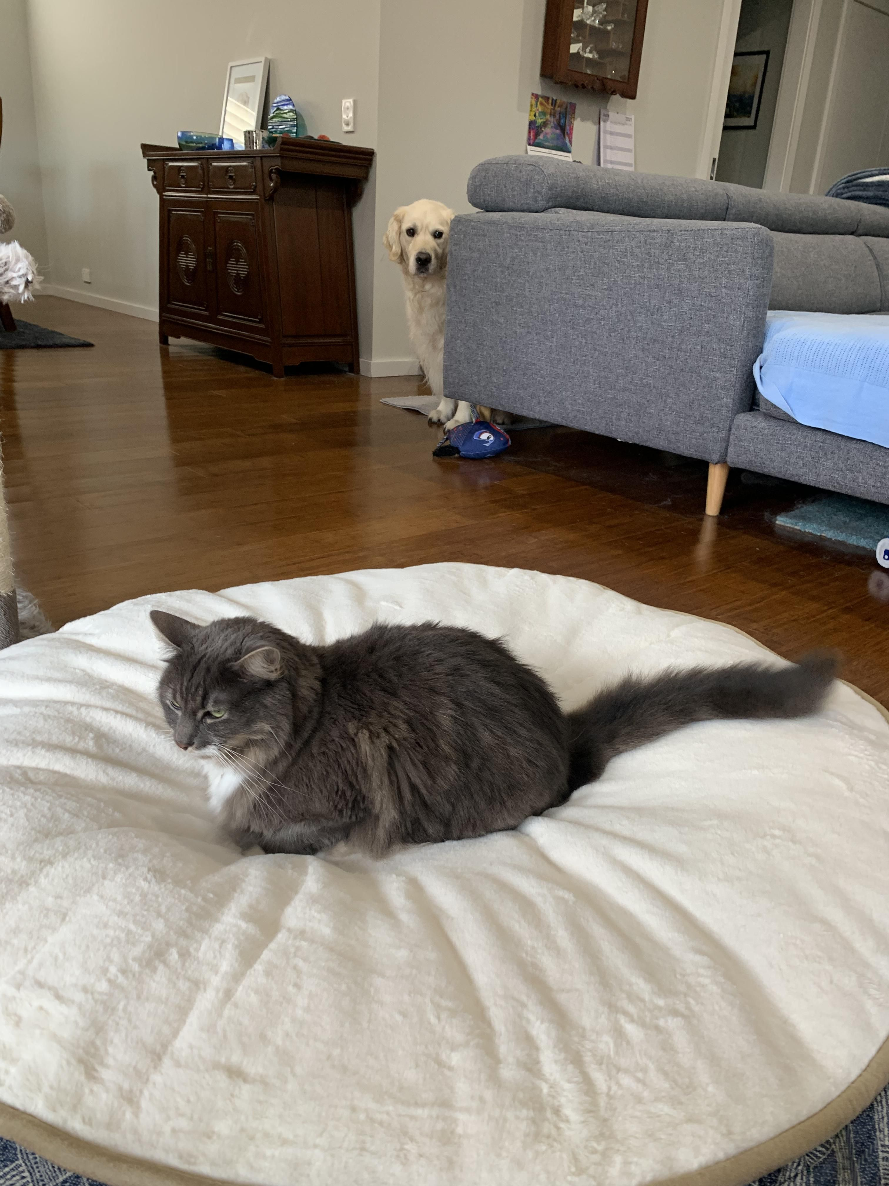 We picked up the new bed for the dog today.