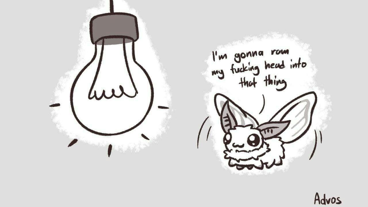 moth memes are back