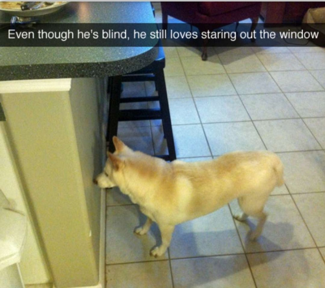 The best window this dog can stare out from