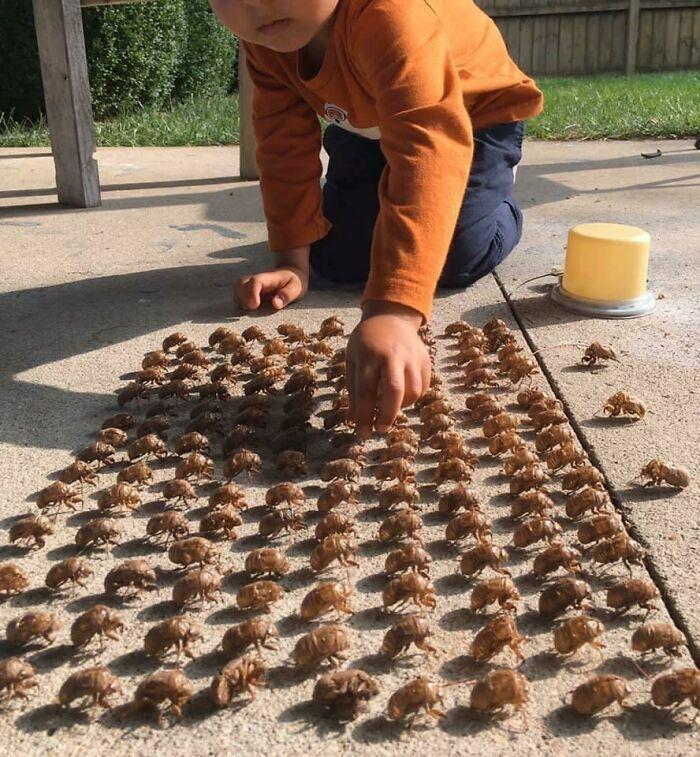 Elite army of cicada skin
