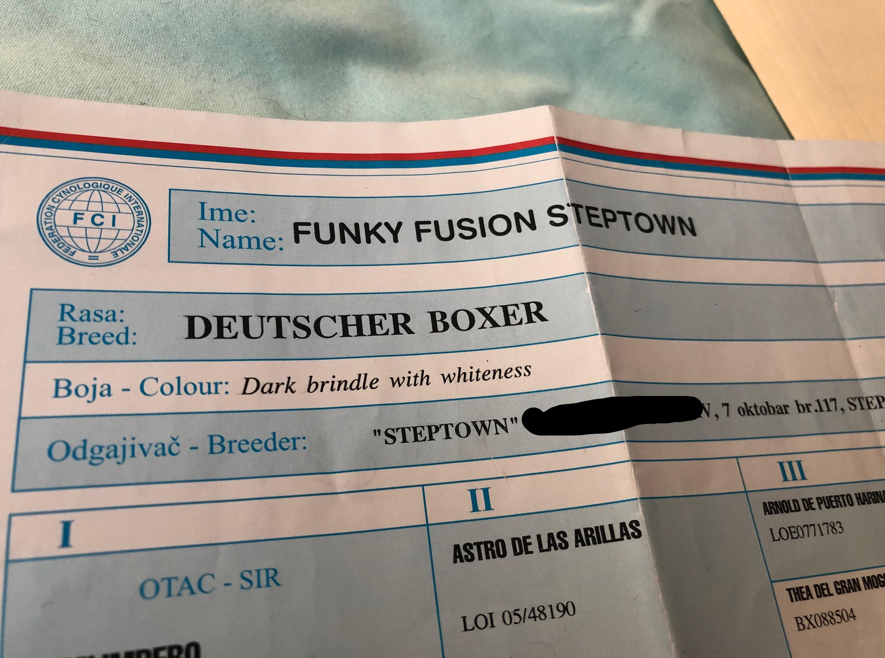 My dog is from Serbia, just found out his legal name .