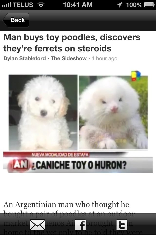 Ferrets on steroids