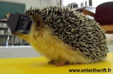 Oculus Rift for hedgehogs