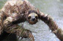Wet sloths are made of nightmares