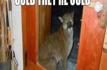 Saw this on Facebook. Yeah let me just go ahead and let this mountain lion in...