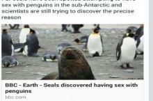 Dem horny seals
