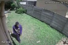 Ferocious guard dog chases off burglar