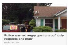 Badass goat